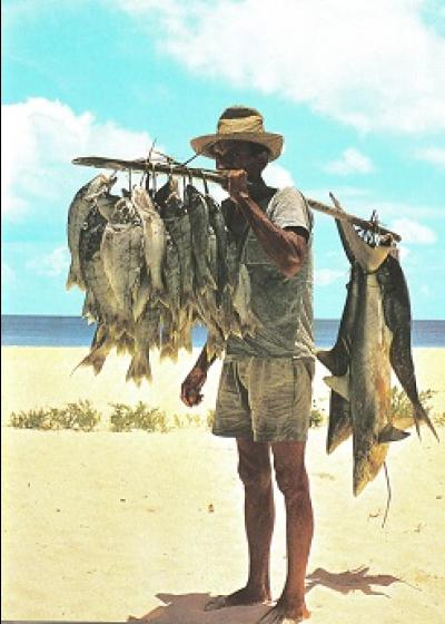 Sustainable Fishing In Seychelles